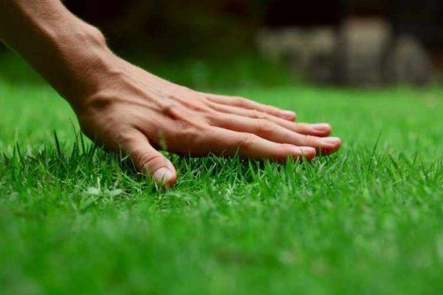 Mantención de jardines y espacios verdes.