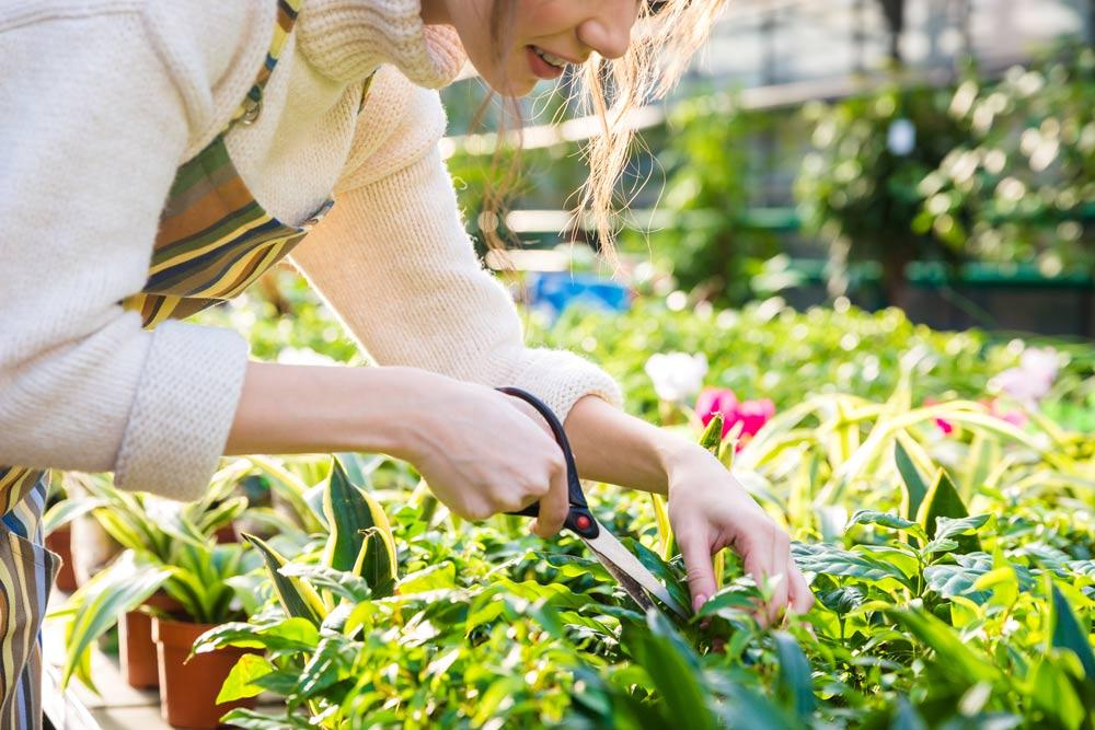 corte de césped corte de pasto en primavera