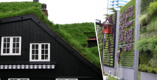 Construcción de jardines – Nuevas tendencias: jardines verticales y en techos