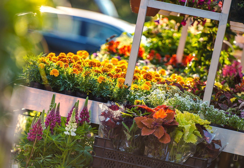 Construcción de jardines a la sombra – ¿Cómo crear el diseño de jardines?