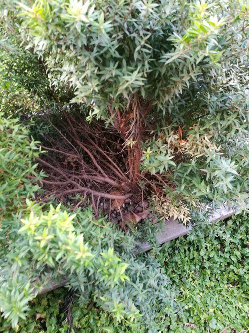 fumigación de jardines nematodos